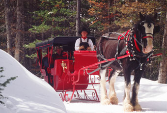 Vacationers enjoy a ride on a one-horse open sleigh near Breckenridge.